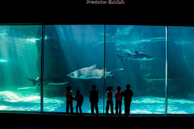 aquarium CPT A (1)