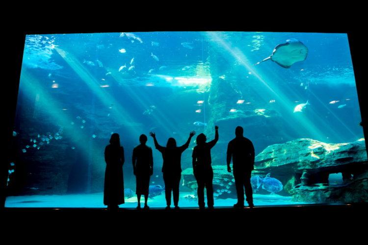 aquarium CPT A (3)