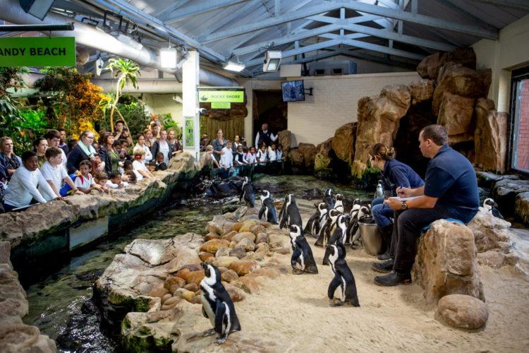 aquarium CPT A (8)
