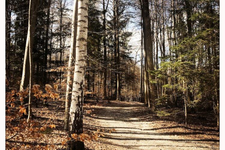 Starnberger nordbad - steg 1 (3)